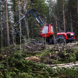 Harvennushakkuiden määrä kasvaa Lapissa – Luonnonvarasuunnitelma ohjaa Metsähallituksen toimia tulevina viitenä vuotena