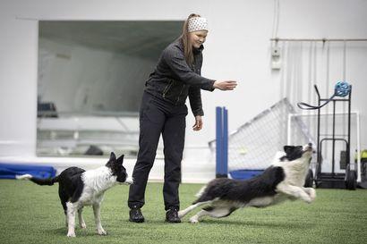 Etälääkäripalveluiden suosio kasvaa vauhdilla – Suurin osa potilaista on koiria