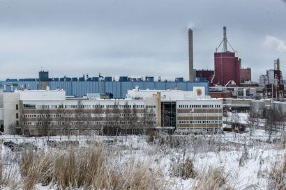 Villisikoja Stora Enson Oulun tehdasalueella – eläimiä uhkaa lopettaminen