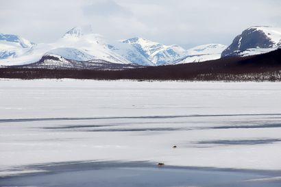 Kun suuri sopulivaellus alkoi Kilpisjärvellä keväällä 1970, paikalle hälytettiin nuori myyräharrastaja Heikki Henttonen – Siitä asti hän on tutkinut sopuleita ja arvelee, että vastaavaa liikehdintää ei ehkä enää nähdä