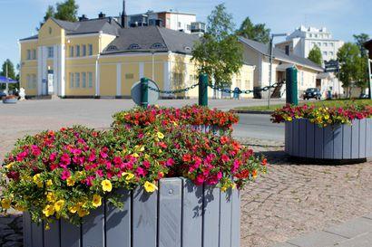 Lapin kaupungit kukkivat pian surfiniaa ja samettikukkaa – Kemissä valitaan tuulta kestävät kukat, Rovaniemellä kylmää sietävät