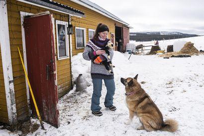 Maatilan elämää kokemassa yksi ryhmä kerrallaan – Säkkilänvaaran Eläintila oli Ulla Kurvisen elämänmittainen unelma