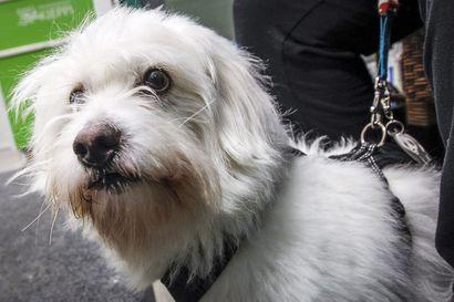 Kemi ja Tornio ovat mukana Suomen suurimmalla koiralenkillä