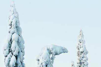 Koillismaalla ei pelkoa mustasta joulusta – lunta luvassa vähintään neljä senttiä ja pakkanen paukkaa tapanina