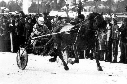Kovaluontoisesta Hiposta varttui yksi kaikkien aikojen parhaista suomenhevostammoista