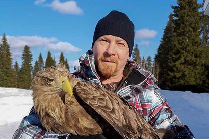 Merikotka jalkapatikassa - pelastettu lintu palautetaan luontoon heti kun se kuntoutuu