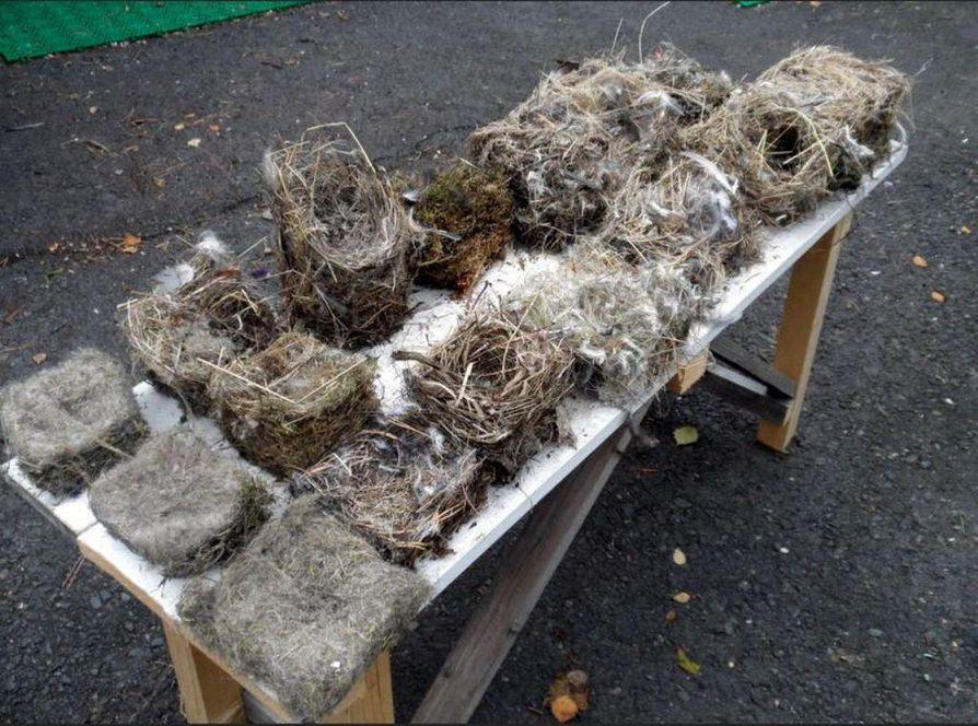 Lukija tyhjensi maanantaina 13 linnunpönttöä puutarhastaan ja keräsi  lintukotojen sisustukset kuvaan.