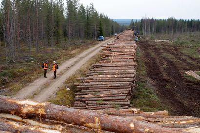 Puukauppa virkistynyt Pohjois-Suomessa – koko vuosi jäämässä edellisvuodesta, mutta loppuvuodesta metsänomistajat ottavat loppukiriä