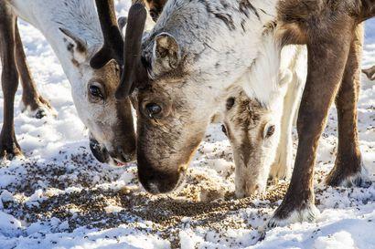 Eläinvierailuja toivotaan Pudasjärven päiväkodeille