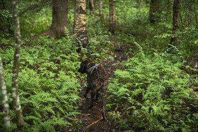 Luonnossa eletään herkkää aikaa: Koirat on pidettävä kiinni