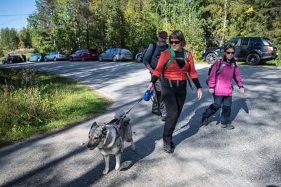 Matkailijat täyttävät polut ja kaupat Koillismaalla – Ennätysvilkkaan kesän jälkeen kansallispuistossa ja päivittäistavarakaupassa odotetaan nyt myös vilkasta syksyä
