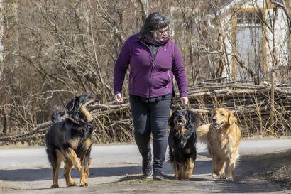 Korona synnytti koiranpentubuumin ja kasvattajien pentuvarauslistat ovat nyt täynnä – kovalla kysynnällä on myös varjopuolensa