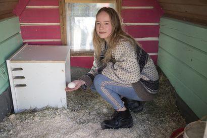 """Kempeleläinen Silja Myllymaa jakaa kotinsa kahden koiran, kahden ankan, nakuhiiren ja kotilon kanssa: """"Unelmana olisi joskus muuttaa maalle ja elää vielä luonnonvaraisemmin"""""""