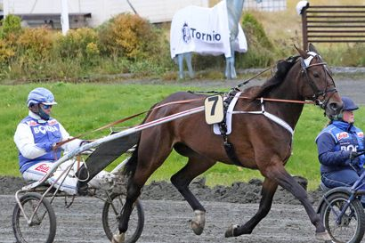 Salmelan ja Forssin yhteistyö toimi hyvin Bodenissa - Cupido Sisu ja Silver And Cold toivat kaksikolle voitot