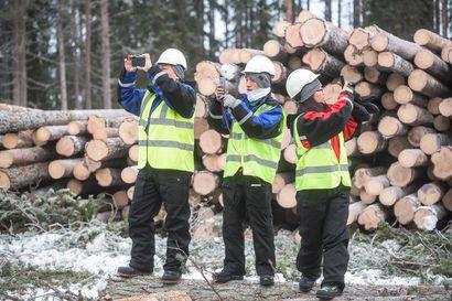 Kiinalaiset kauppakumppanit kuvasivat kaadetut puut – Pölkky hakkaa Ahosaaressa metrin paksuisen jäätien takana