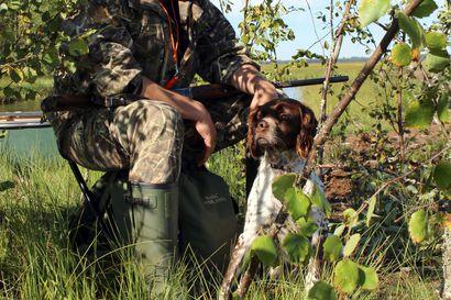 Metsästyksellä on iso taloudellinen merkitys, vaikka kukaan ei enää elä pelkästään metsästämällä