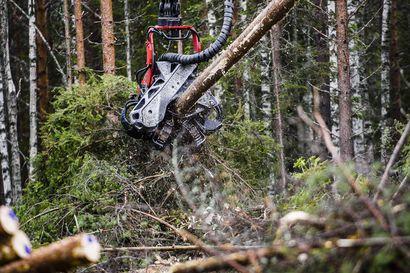 Korona nosti voimakkaasti puun hintaa, mutta Amerikassa hintojen nousu on jo pysähtynyt – Puukaupalla on yhä iso merkitys