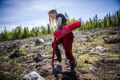 Lukijalta: Suomen metsävarat tunnetaan tarkasti