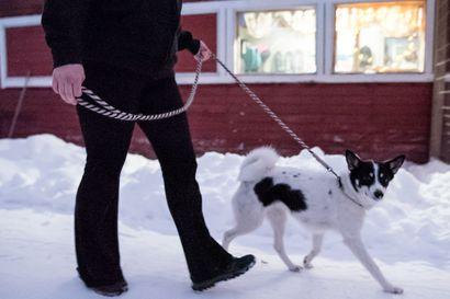Uusivuosi aiheuttaa eläimille pelkoa – ilotulitteista kärsivät muutkin kuin koirat