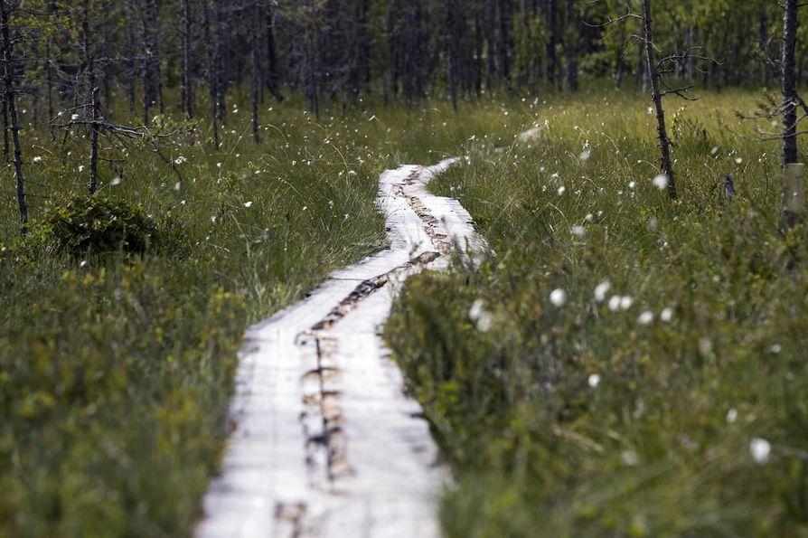 Pitkospuita korjataan noin kymmenen vuoden välein. Kalimenlammen retkeilyreitillä pitkospuut ovat  alkaneet jo lahota.