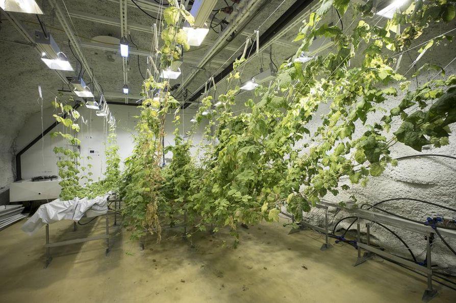 Kasvatushuoneeseen on asennettu hydroponinen tuotantoteknologia sekä siihen liittyvä valaistus-, vesi- ja ravinneteknologia.