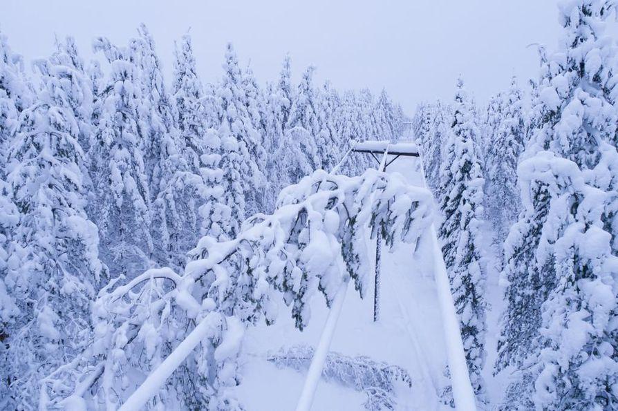 Kainuun sähkönjakelu on kärsinyt tänä talvena vaikeasta lumitilanteesta.