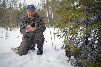 """Pudasjärvenkin metsien vapaaehtoiseen suojeluun tarjolla rahaa metsänomistajille – """"Mukaan ehtii, vaikka 20 miljoonan euron lisäraha on huvennut kovaa vauhtia"""""""