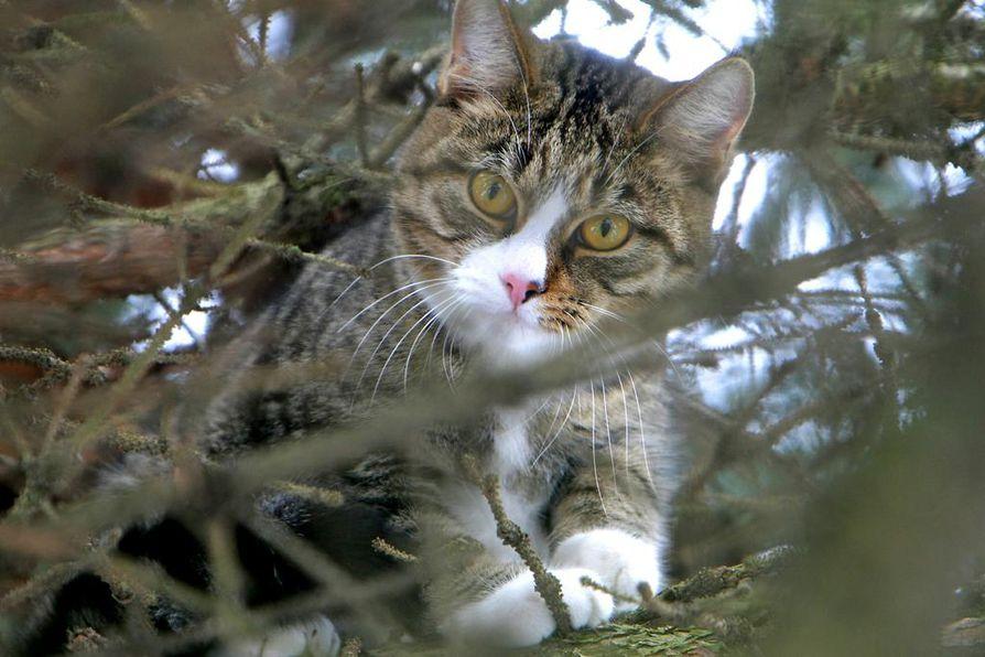 Kuvituskuva. Kuvan kissa ei liity kuolemantapauksiin.