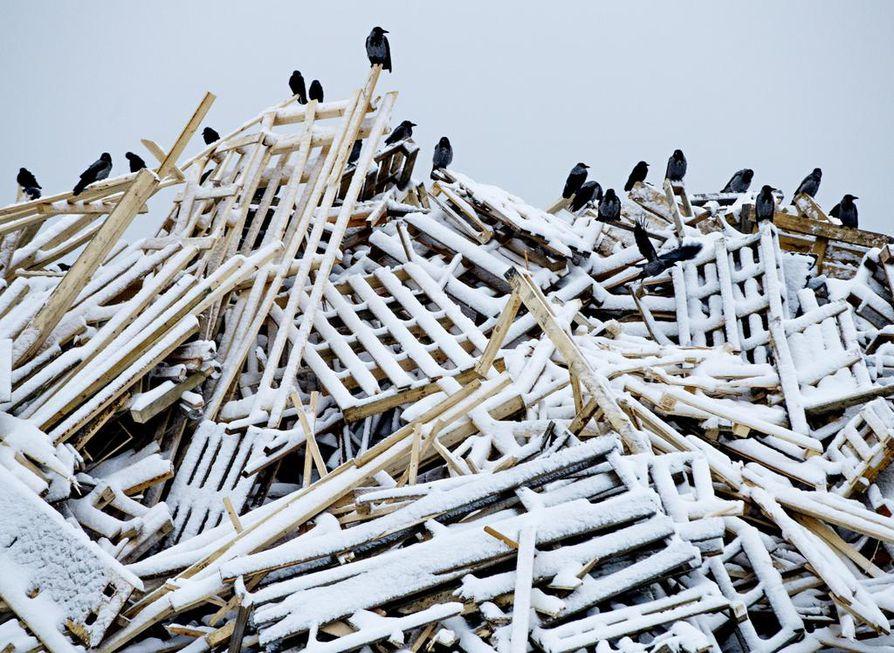 Ruskon kaatopaikkaa on pidetty lintubongarin paratiisina, ja siellä asustelee varislintujen lisäksi muun muassa huuhkajia. Linnut ovat viime vuosina vähentyneet, koska syötäväkin on vähentynyt loppusijoitettavan jätteen loppumisen myötä.