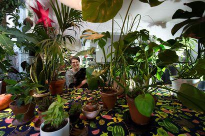 Yksi pärjää pimeimmässä nurkassa, toinen tahtoo juopua päivittäin – Riikka Lehtovaara asuu viherkasvien valloittamassa kodissa