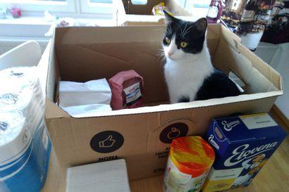 Elämää poikkeusoloissa: Laatikko-ostoksia ja laatikkoaskarteluja