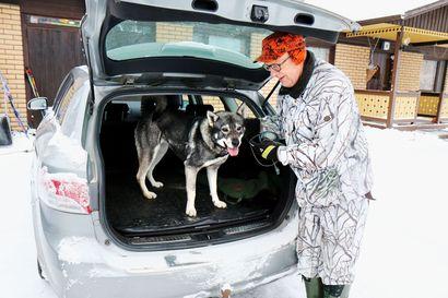 Alkutalvi on vaarallista aikaa metsästyskoirille – Pelastuspäällikkö: Omaa henkeä ei kannata riskeerata, jos eläintä ei voi turvallisesti lähteä pelastamaan
