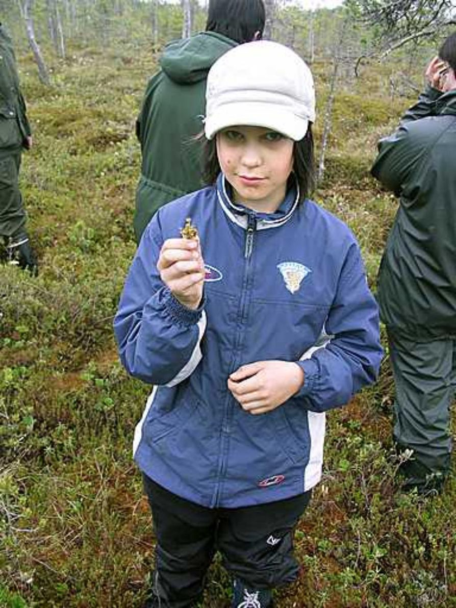 Mitja Häikiö löysi kihokin suolta, vaikka se tähän aikaan vuodesta on vielä erittäin pieni.