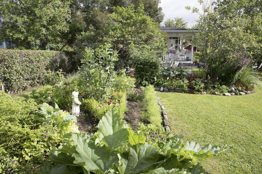 Paras aika kastella puutarhan kasvit on aamu.