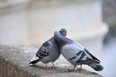 Suudelma on parisuhteen onnen mittari – Päivittäinen pusuttelu parantaa elämänlaatua ja vaalii parisuhdetta
