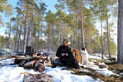 Kelirikon vangiksi vai kylille? Kevät on heikentänyt Inarin jäät, ja siksi erämaassa asuvan on tehtävä päätös, missä viettää toukokuu