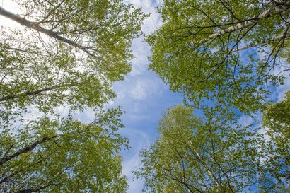 Sääprofeetta ennustaa: Kesästä tullee lämmin