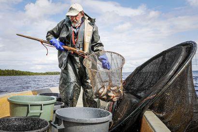 Lukijalta: Kotimainen kala kunniaan tuhansien kalavesien Suomessa