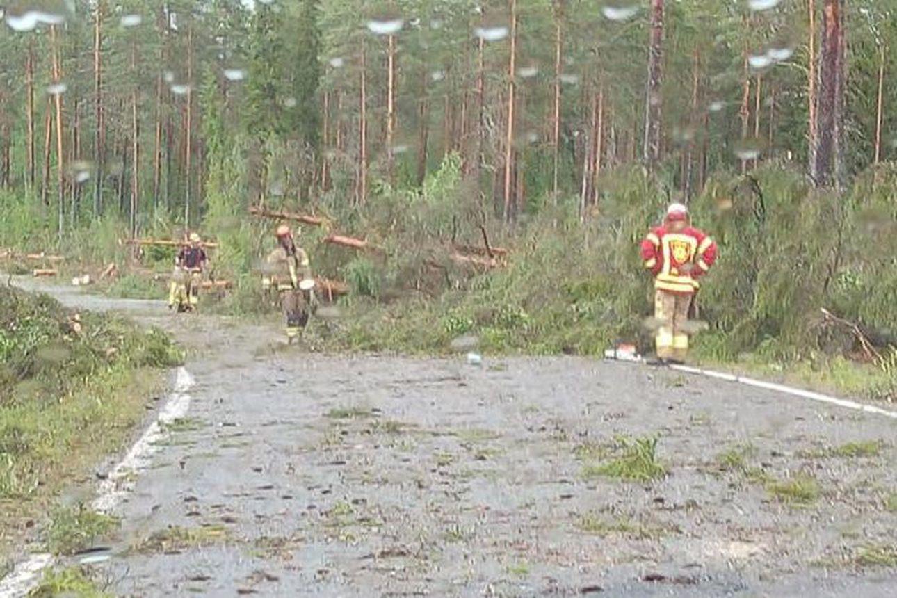 Kymmeniä puita kaatui Sanginjoentielle – kyseessä ollut ilmeisesti syöksyvirtaus