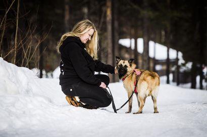 Inarin löytöeläintarhan pitäjä Nina Lager luuli lapsena, että koirat ymmärtävät ihmisten kieltä – Miljoonan idean vauhtinainen joutui pysähtymään, kun metsästä löytyi pelokas ja paleltunut pentu
