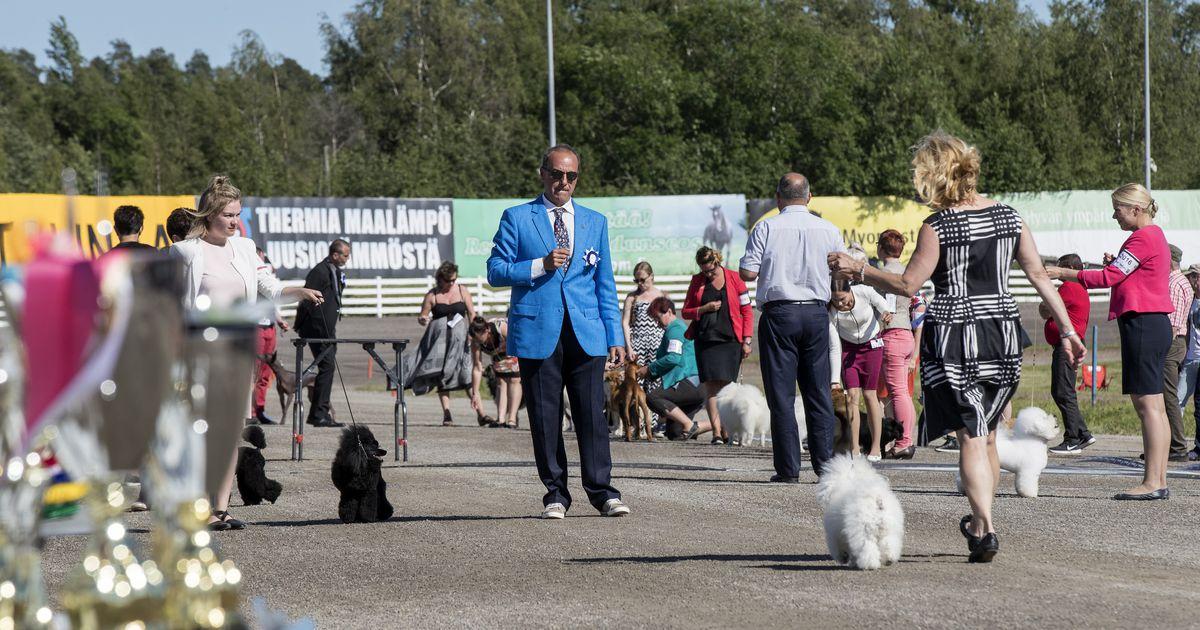 Kadonneet Koirat Oulu
