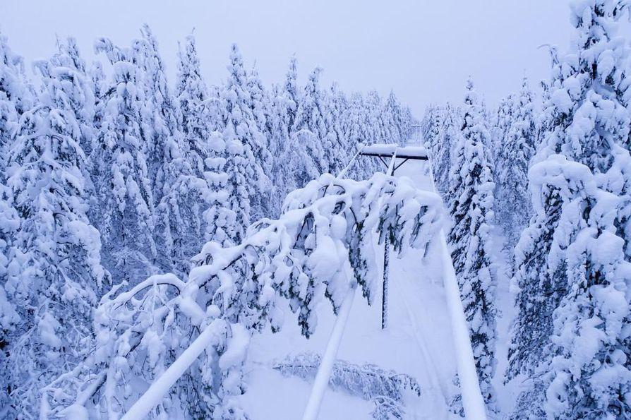 Vuoden 2018 tammikuussa tykkylumi sai puut kaatumaan sähkölinjan päälle Suomussalmella.