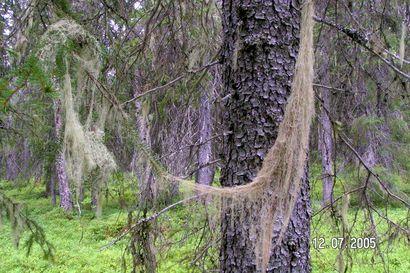 Koulutuksia tulossa metsänomistajille