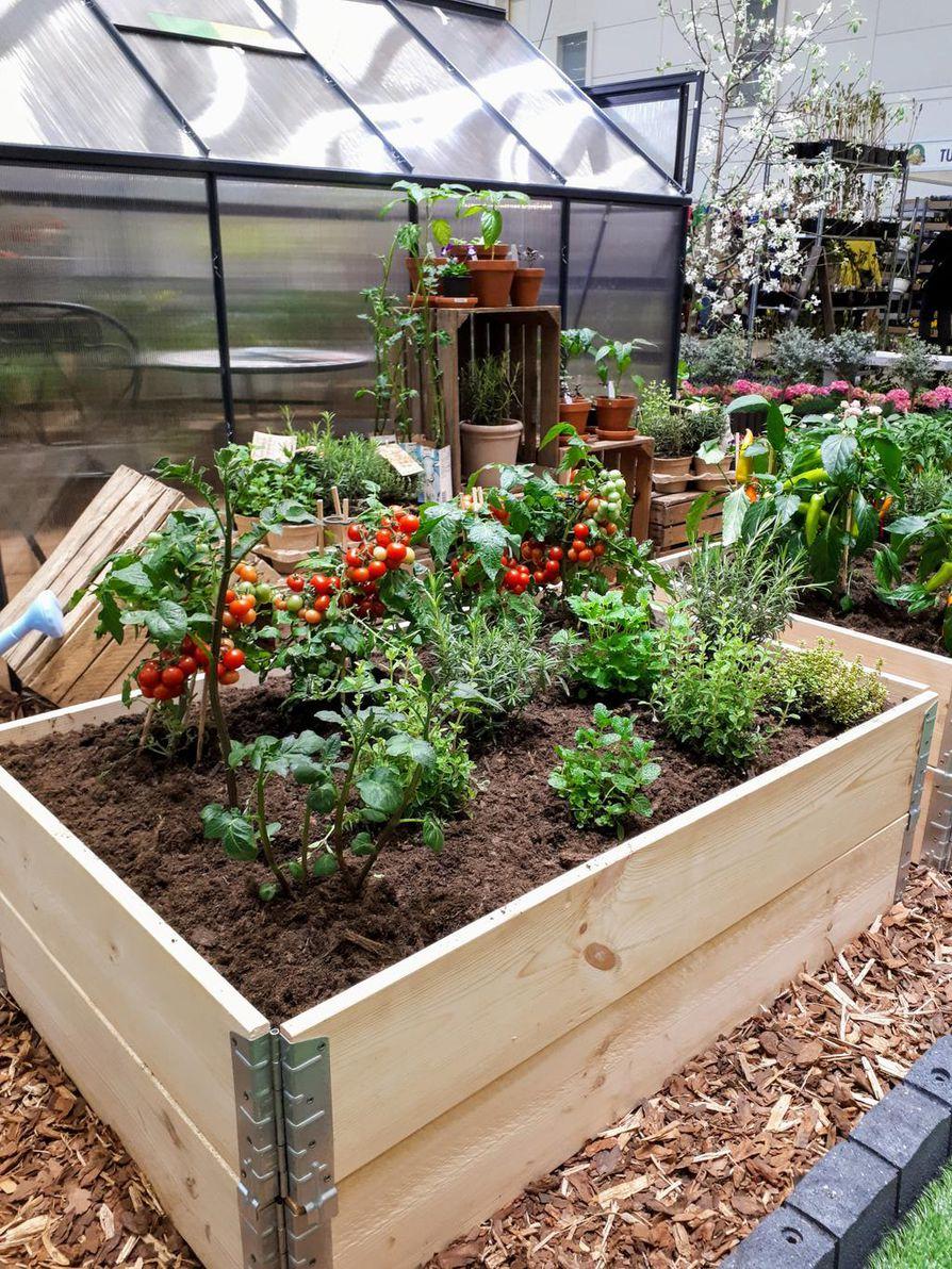 Hyötykasviviljely kasvilavoilla ja -huoneissa kiinnostaa erityisesti nuoria.