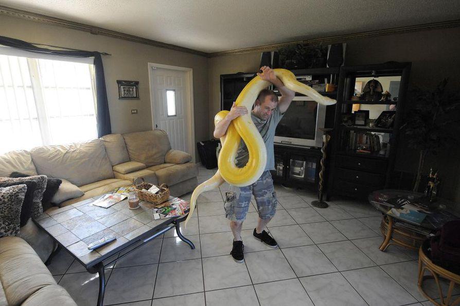 Eteläaasialaiset pytonit ovat vieraslaji Floridassa Yhdysvalloissa. Käärmeenmetsästäjä Edward Mercerilla on oma pyton kotona.