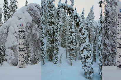 Katso lukijan kuva: tällainen on nyt lumimäärä Taivalkoskella