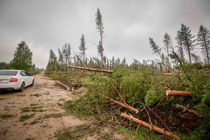 """Oulussa siivotaan edelleen Paula- ja Ahti-myrskyjen jälkeisiä tuhoja – """"Myrskyjen seurauksena talousmetsissä kaatui noin 4000–5000 puuta, tarkoittaa satoja rekkakuormallisia"""""""
