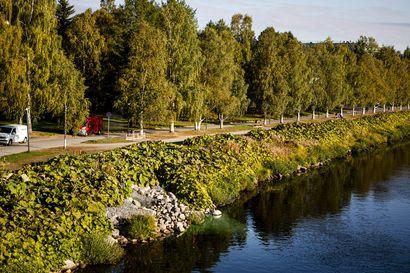 Kaukolämpövesi virtasi Rovaniemellä Kemijokeen ohjatusti –Syysaamuina vesi usein höyrystyy voimakkaasti