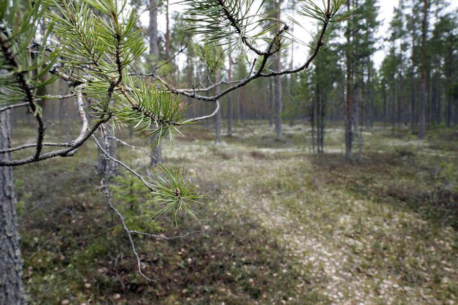 Pohjois-Pohjanmaalla suojelupäätöksiä on tehty pinta-alallisesti eniten Suomessa.