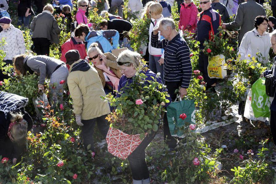 Ruusujen hakijoita Pakkahuoneenkadulla sunnuntaiaamuna.